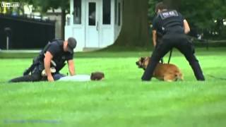 Download Pokemon fan jumps over fence @ white house 3Gp Mp4