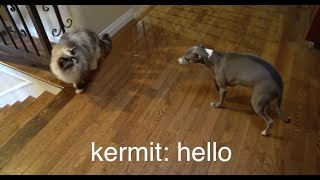 Download My Dogs Meet A Cat 3Gp Mp4