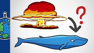 Download What Nuclear Bombs Taught Us About Whales 3Gp Mp4
