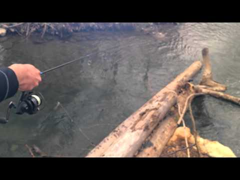 Jigging Trout Magnets for Rainbow Trout