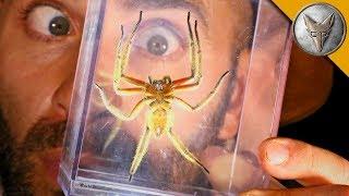 DANGEROUS Jungle Spider! by : Brave Wilderness