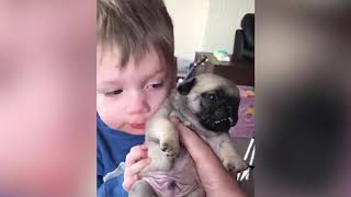 Funny Dogs Episode 5