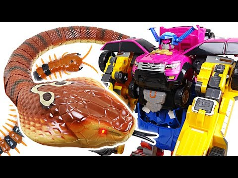 Terrible King Cobra appeared in Tayo town! Go Miniforce 4 combine robot!! - DuDuPopTOY