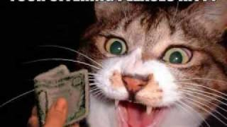 FUNNY CAT PICS EPISODE 4!!!!!!!!!!!!