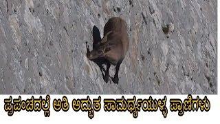 ಪ್ರಪಂಚದಲ್ಲೆ ಅತಿ ಅದ್ಭುತ ಸಾಮರ್ಥ್ಯಯುಳ್ಳ ಪ್ರಾಣಿಗಳು  Animals With Incredible Abilities  