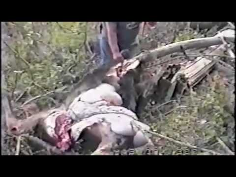 The French Creek moose killing.