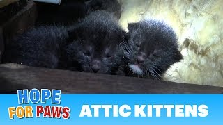 Tiny kittens born in an attic - their mom was watching closely as we pulled them one-by-one.