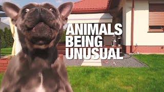 Animals Being Very Unusual