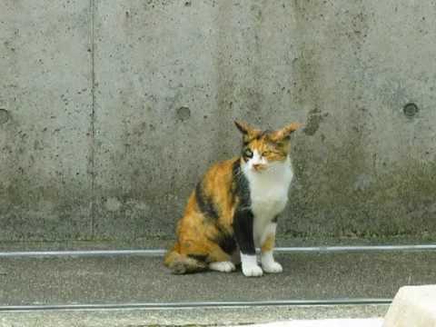 【合唱曲】 「虹の橋」から 『うちの裏のどら猫』 - YouTube ナビゲーションをスキップ