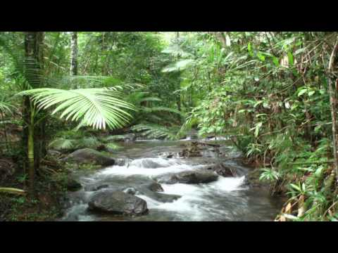 Moni Carlisle, Ph.D., director of The SFS Center for Rainforest Studies in North Queensland, Australia discusses the highlights of SFS Australia