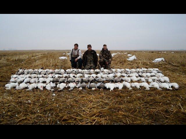 Spring Snow Goose Hunting 2014...116 bird day