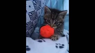 Very very cute baby cat
