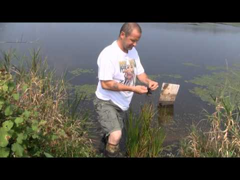 snapping turtle fishing 2011.wmv