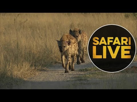 safariLIVE - Sunrise Safari - June, 10. 2018