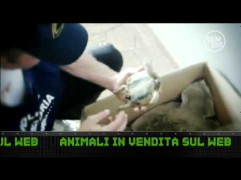 Bau Boys Pt. 40 – Puniamo la vendita di animali online!