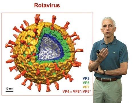Stephen Harrison (Harvard) Part 3: Non-enveloped virus entry