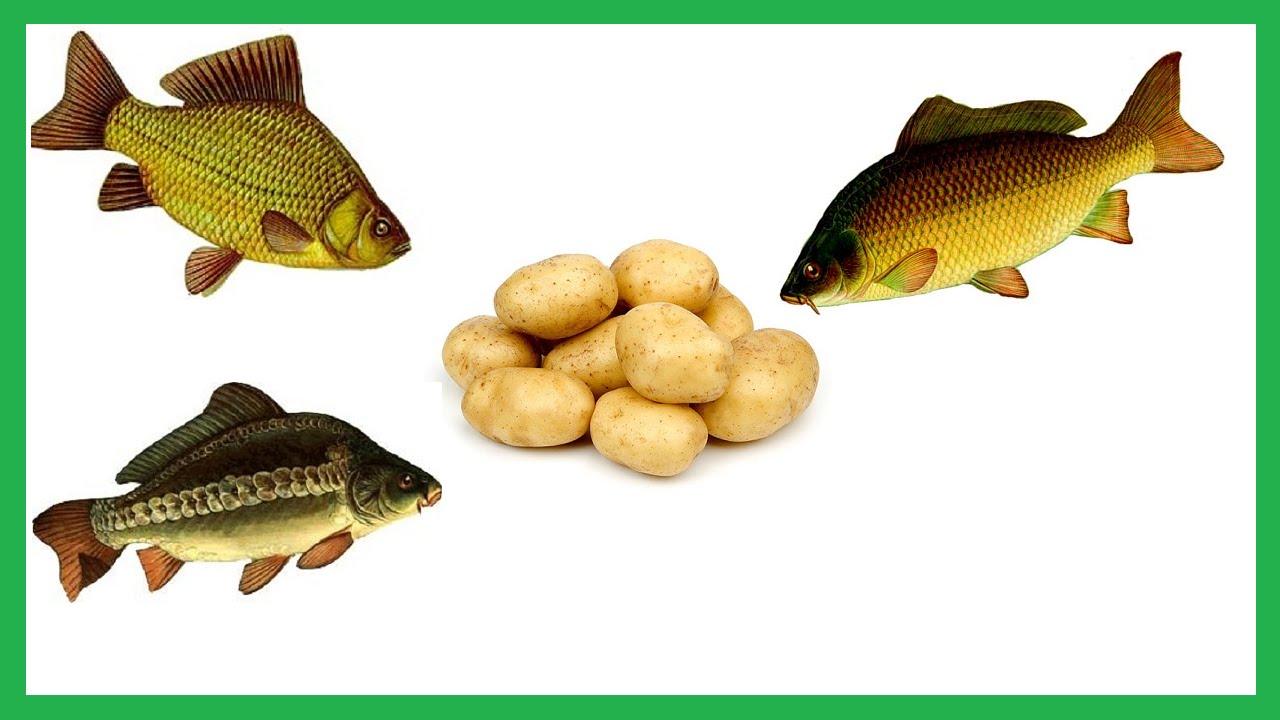 наживка для любой рыбы