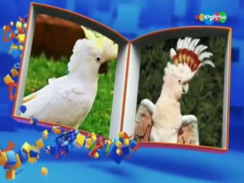 Детская передача Перемешка на канале карусель
