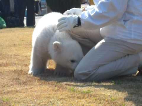 ホッキョクグマの赤ちゃんお散歩20100202_53.