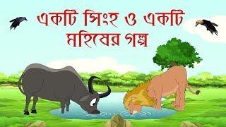 The Lion and A Buffalo