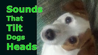 Sounds That Tilt Dogs Heads Sounds Dogs Love Most Dog TV Dog Treat