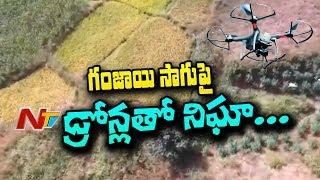 గంజాయి సాగుపై డ్రోన్లతో నిఘా | ఏజెన్సీ ప్రాంతంలో డ్రోన్లతో నిఘా పెట్టిన ఆర్టీజీఎస్ | NTV