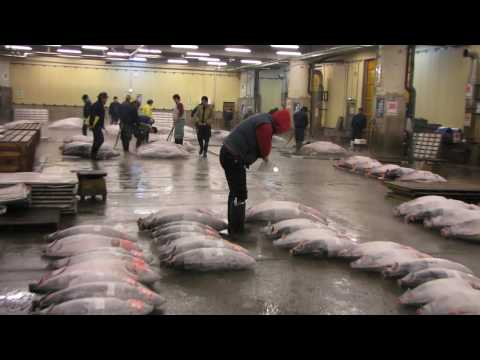 Tokyo, Tsukiji Fish Market and the famous Tuna Auction