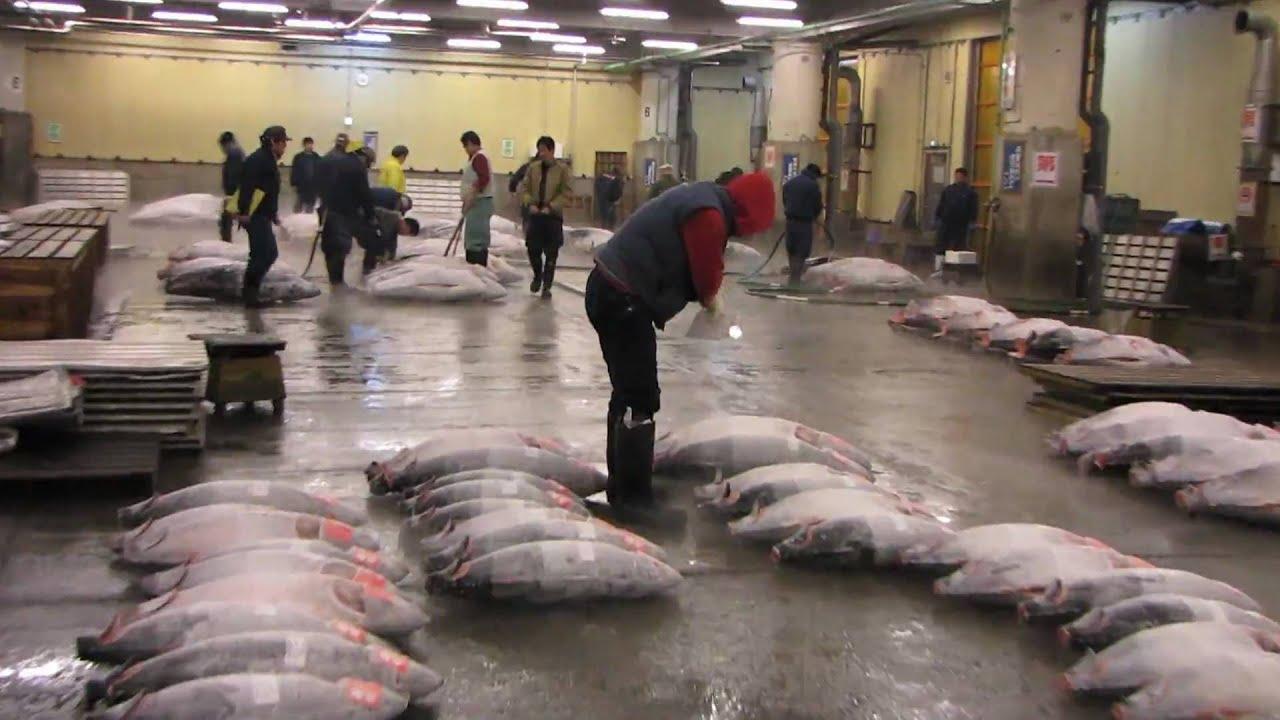 Tokyo tsukiji fish market and the famous tuna auction for Japan fish market