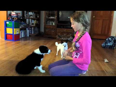 Nana the border collie puppy training 8 weeks old