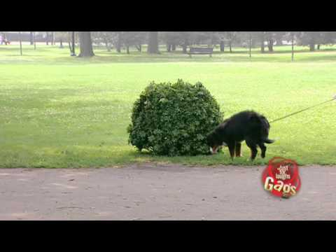 JFL Hidden Camera Pranks & Gags: Dog Joke