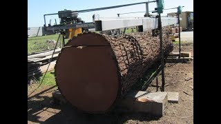 Pacific Coast Lumber. Giant Walnut Milling.  23,000 pound log milled.