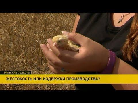 Девушка по дороге на дачу увидела в поле несколько тысяч яиц