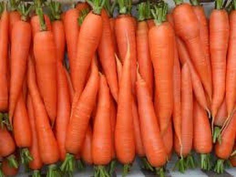 Секреты посадки морковки