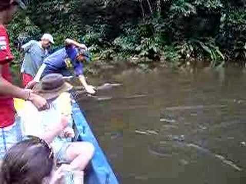 Piranah fishing-Amazon Peru-I know he catches Pacu not piran