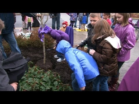 Tree Planting Ceremony In Memory Of Charlie & Braden Powell Carson Elementary Puyallup WA