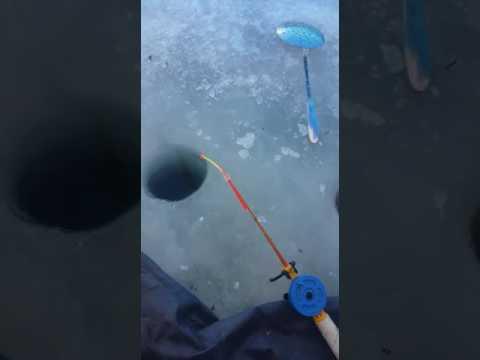 жезказган рыбалка видео