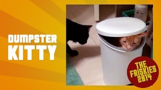 Dumpster Kitty - The Friskies 2014 Cat Video Awards