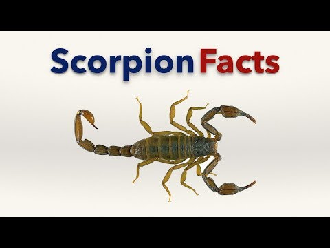 Scorpion Facts streaming vf