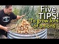 5 Tips How to Grow a Ton of Onions in One Container or Garden Bed