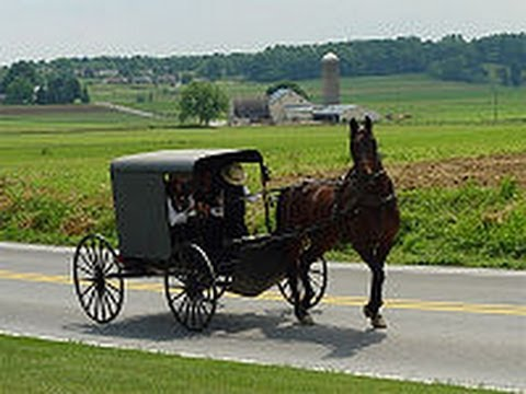 Amish Child Sex Sting In Horse-drawn Buggy video