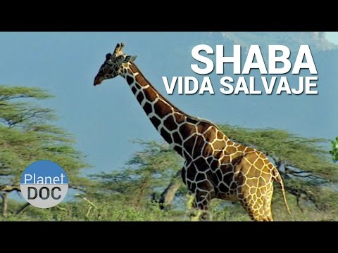Shaba. Vida Salvaje | Naturaleza - Planet Doc