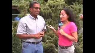 Los topiarios y la importancia de podar las plantas