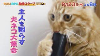動物スクープ100連発【激カワ&爆笑!ご主人を困らす犬猫㊙行動&ギモン検証SP】