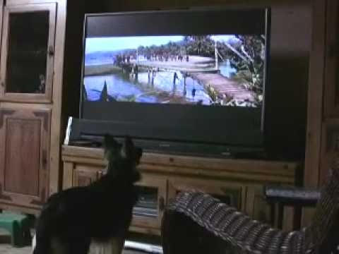 Mareike watches Swiss Family Robinson-Small web movie