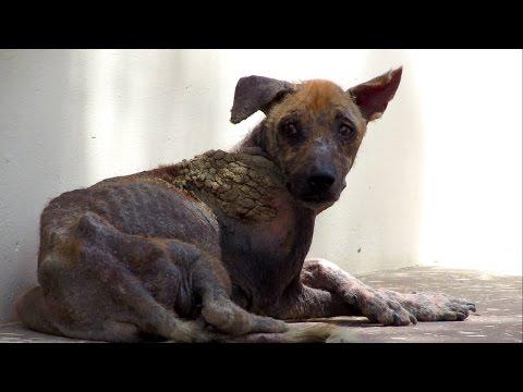 助けられた犬が劇的に回復する姿に涙目