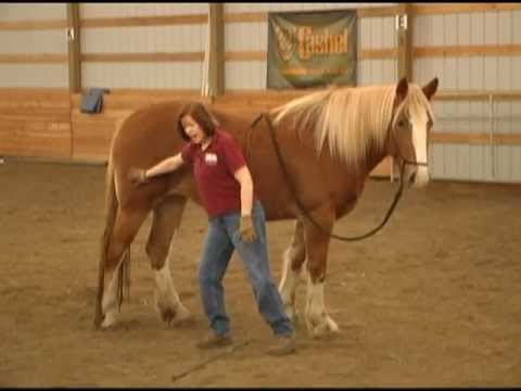 Five Fundamentals of Horse Training Part 1 of 2 with Horse Whisperer Missy Wryn