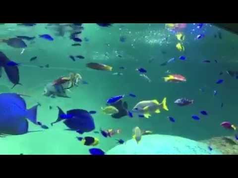 葛西臨海水族館 Kasai Public Aquarium Tokyo,Japan