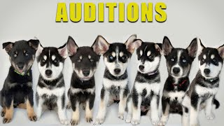 My Puppies will Audition to be my Next Dog!