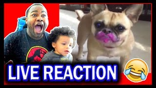 Try Not To Laugh Challenge Funny Cat and Dog Vines 2019