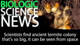 Science News - Scientists find ancient termite colony that's so big, it can be seen from space